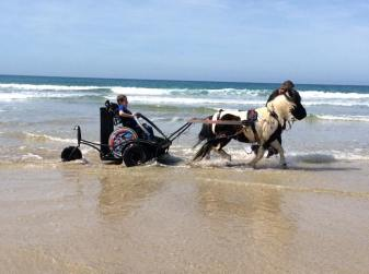 Boy sat in a funky wheelchair, on a carriage, drawn by a pony. They are racing on the beach with the waves around them.