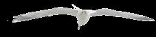 Elf seagull