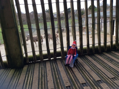 Toy Elf using a powered wheelchair, sat on a brigdge, overlooking a pen with two zebra in.
