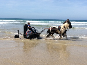 Adam riding on a pony carriage, pulled by a beautiful black and white pony. They are in the sea with the waves lapping gently around them. It is a beautiful day with bright blue sky.